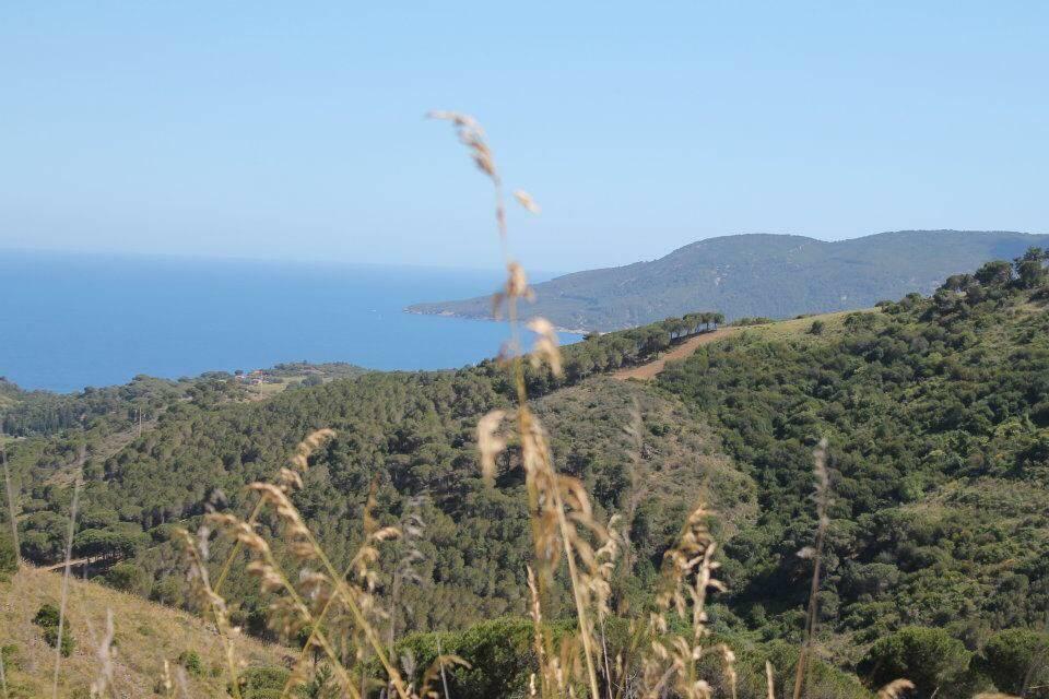Terreno agricolo, Mola, Porto Azzurro