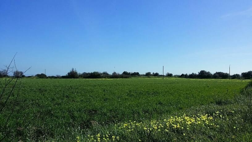 Terreno Agricolo in vendita a Melilli, 9999 locali, zona Zona: Villasmundo, prezzo € 80.000 | CambioCasa.it