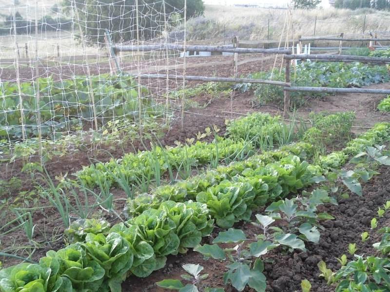 ISOLOTTO, FIRENZE, Terreno agricolo in vendita di 512 Mq, composto da: 1 Vano, Giardino, Prezzo: € 29.000