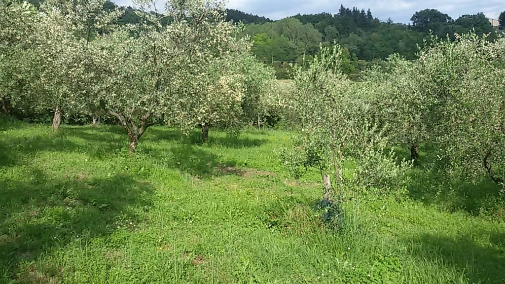 Terreno agricoloaSCARPERIA E SAN PIERO