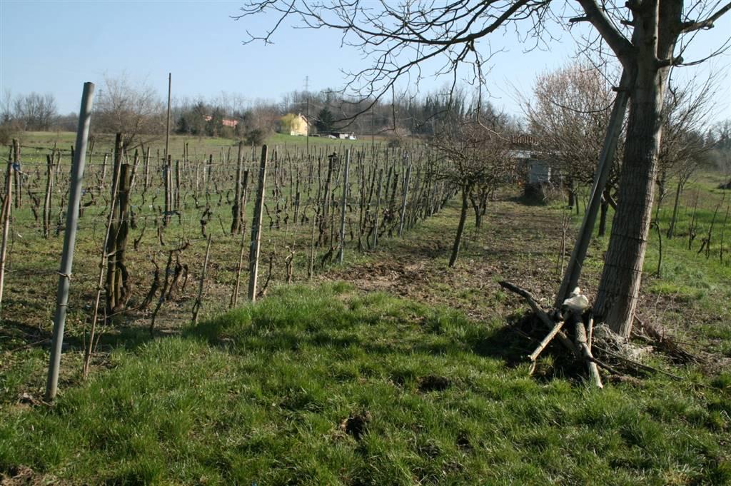 Terreno Agricolo in Vendita a Tortona