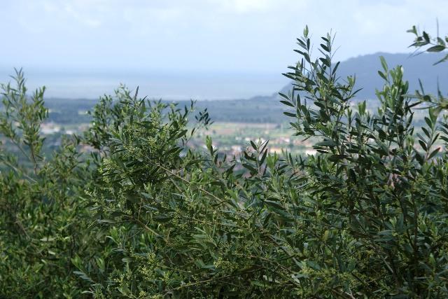 Terreno Agricolo in vendita a Castelnuovo Magra, 9999 locali, prezzo € 35.000 | CambioCasa.it