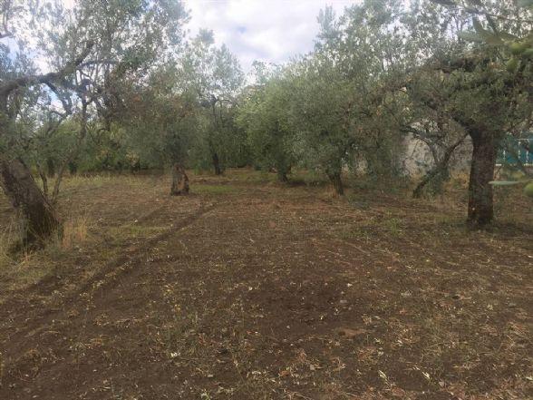 Terreno Agricolo in vendita a Sessa Aurunca, 9999 locali, zona Località: SAN CARLO, prezzo € 100.000 | CambioCasa.it