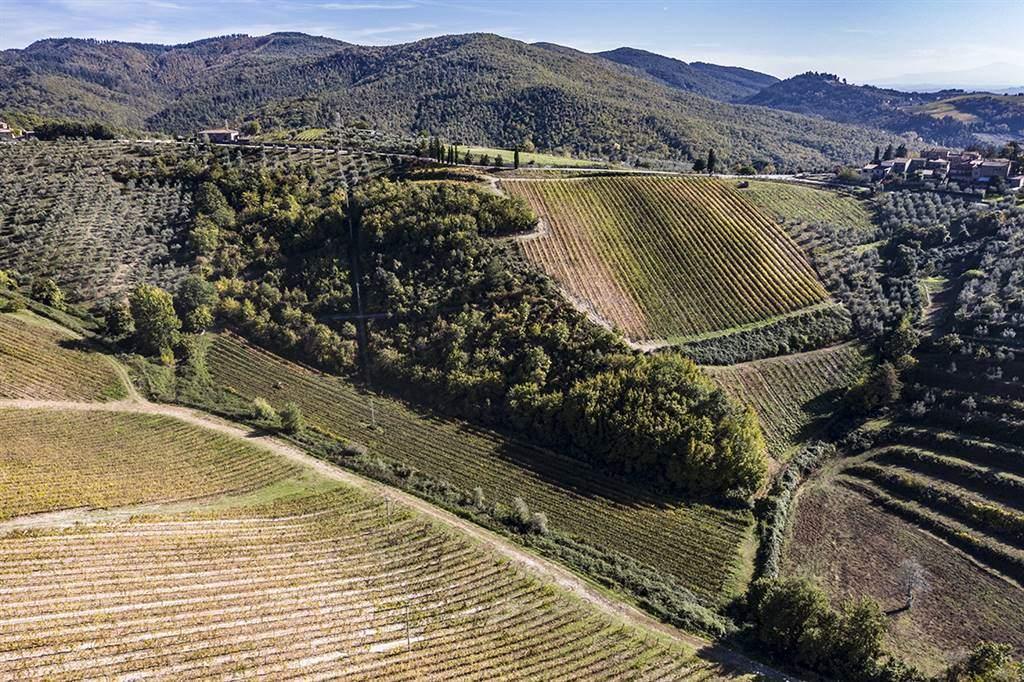 A 30 km da Siena, 6 km da Gaiole, 17 Km da Radda e 20 Km da Bucine, si trova l'azienda agricola Vinicola-olearia che produce ottimo chianti classico