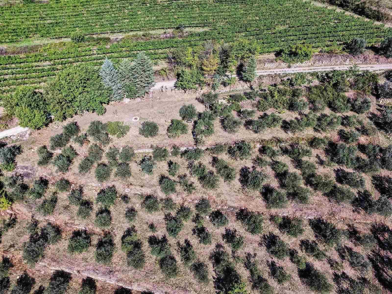 In Loc. Botti - terreno di mq. 7100 con 180 piante di olivo e mq. 1000 di bosco con adiacente ruscello. E' possibile realizzare un'abitazione fuori