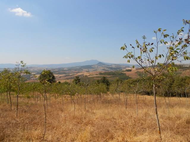 Terreno Agricolo in vendita a San Casciano dei Bagni, 9999 locali, prezzo € 299.000 | CambioCasa.it