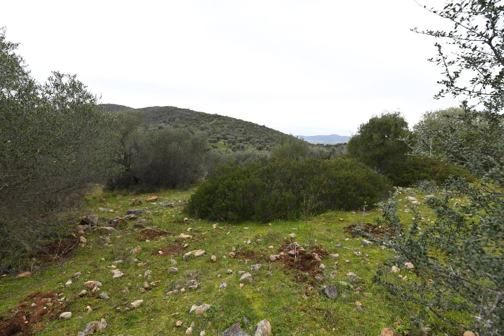 Terreno Agricolo in vendita a Orbetello, 9999 locali, zona Zona: Talamone, prezzo € 22.000 | CambioCasa.it