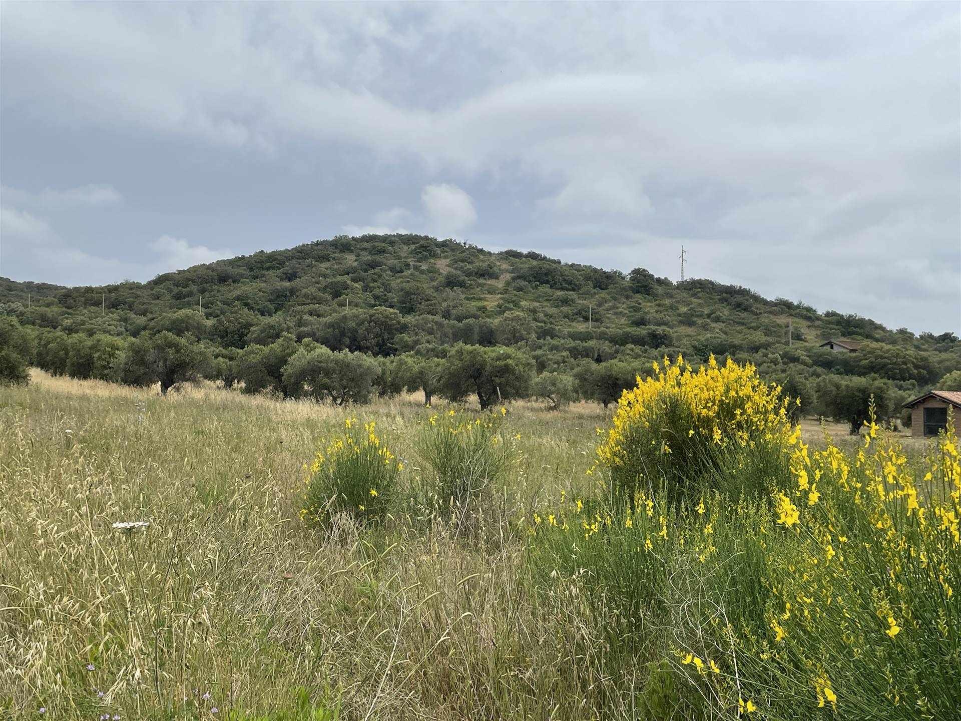 Terreno Agricolo in vendita a Orbetello, 9999 locali, prezzo € 48.000   CambioCasa.it