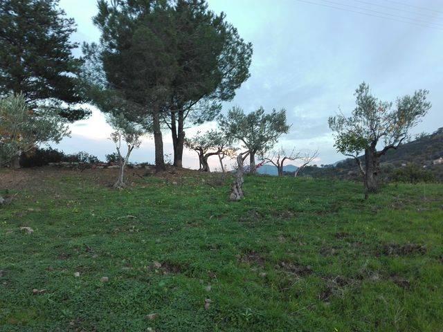 Terreno Agricolo in vendita a Pollina, 9999 locali, prezzo € 10.000 | CambioCasa.it