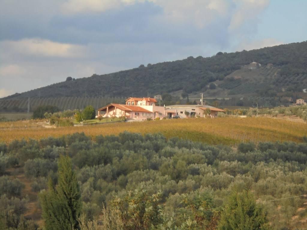 Azienda Agricola in vendita a Montecchio, 1 locali, Trattative riservate | CambioCasa.it