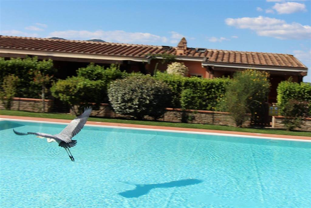 isb-b4 - CASTIGLIONE DELLA PESCAIA, IN RESIDENCE WITH SWIMMING POOL 5/600 M FROM THE BEACH (oltre ponte Giorgini AREA) - Pets allowed - villa with
