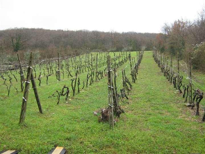 Terreni agricoliFirenze - Terreno agricolo, Legri, Calenzano