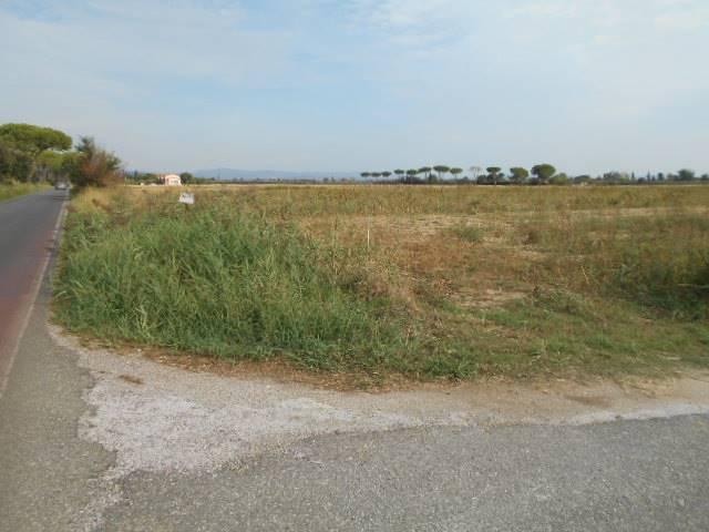 Terreno Agricolo in Vendita a Grosseto