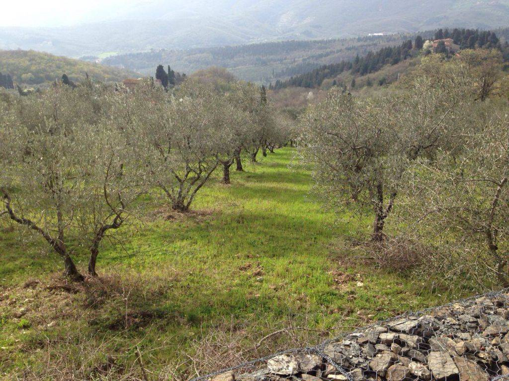 Leccio, CALENZANO, Farming plot of land for sale of 9550 Sq. mt., Energetic class: Not subject, composed by: , Price: € 57,300
