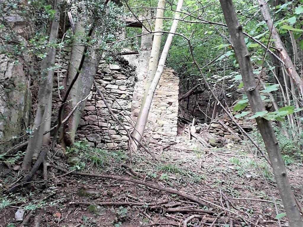 Rudere e boschi
