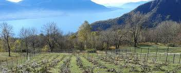 PEVERAGNO, Farming plot of land for sale of 40000 Sq. mt., composed by: , Reserved