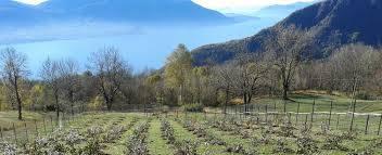 Terreno Agricolo in vendita a Peveragno, 9999 locali, Trattative riservate   PortaleAgenzieImmobiliari.it