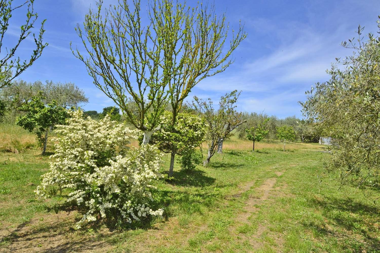 terreno con olivi