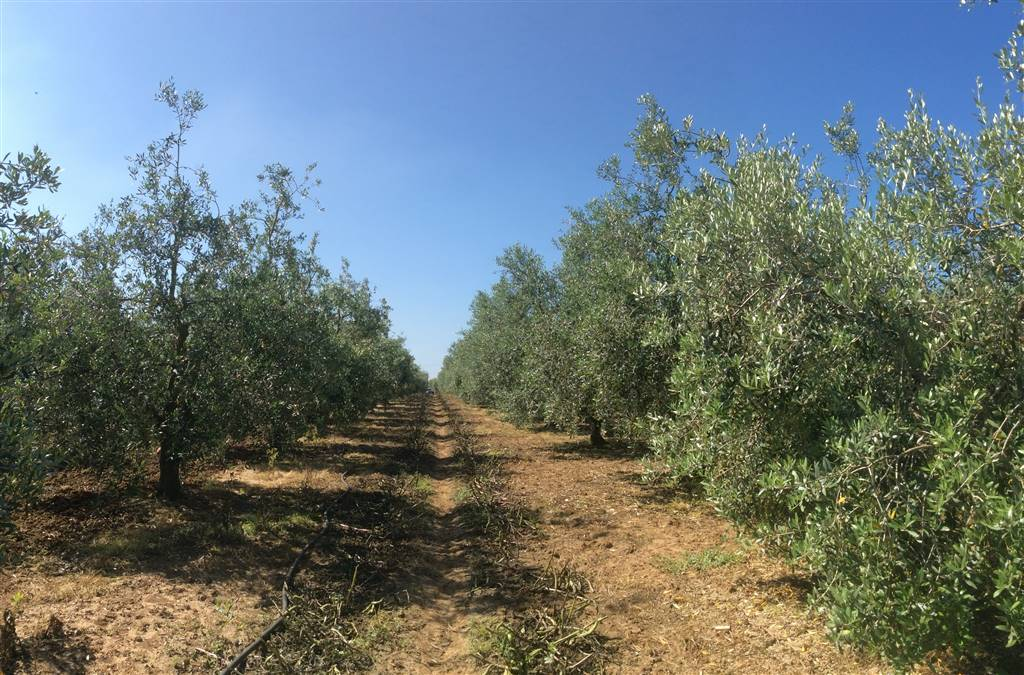 Farming plot of land in PIOMBINO