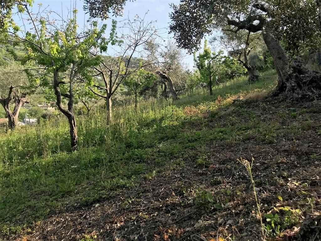 Terreno Edificabile Residenziale in vendita a Agropoli, 9999 locali, prezzo € 63.000 | CambioCasa.it
