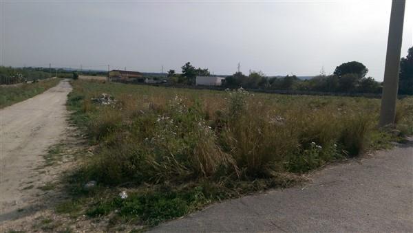 Terreno agricolo a LENTINI