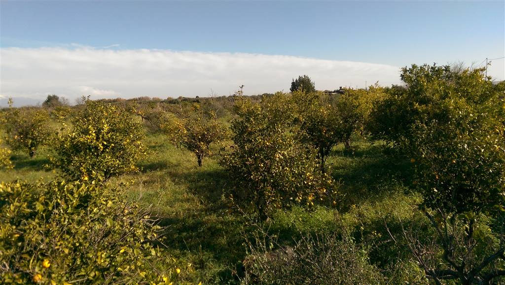 Terreno Agricolo in vendita a Lentini, 9999 locali, prezzo € 20.000   PortaleAgenzieImmobiliari.it