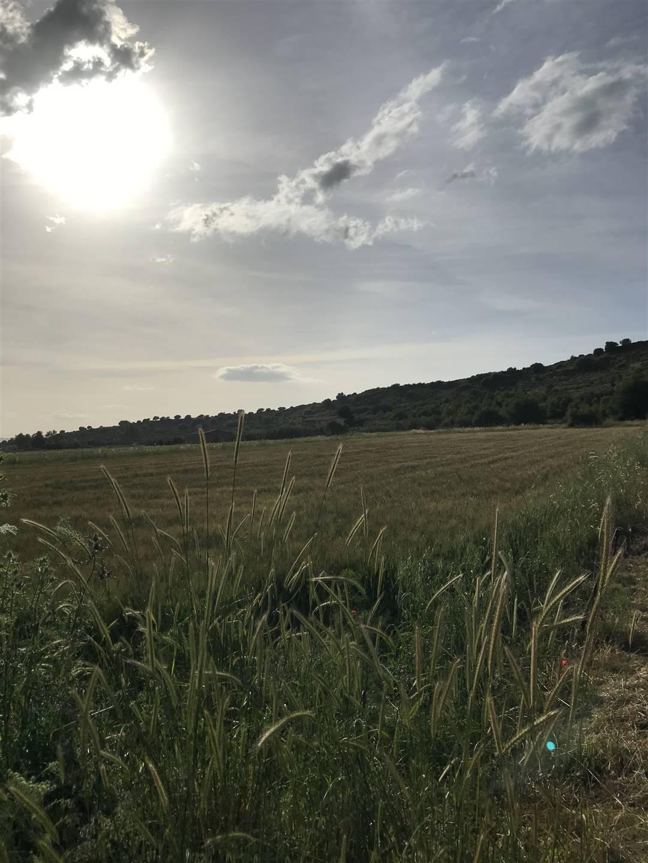 Terreno agricoloaCARLENTINI