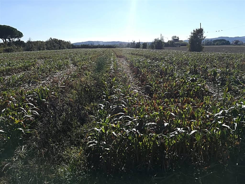 Terreno agricoloaCAMPI BISENZIO