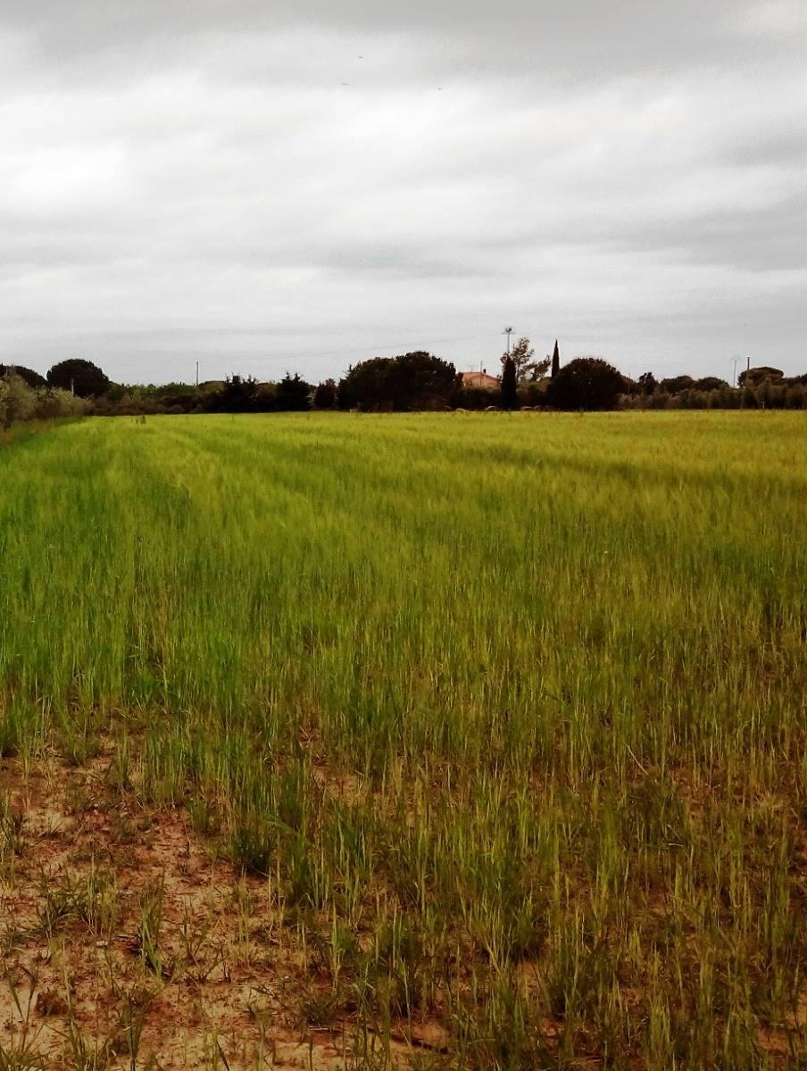 Terreno agricoloaCECINA