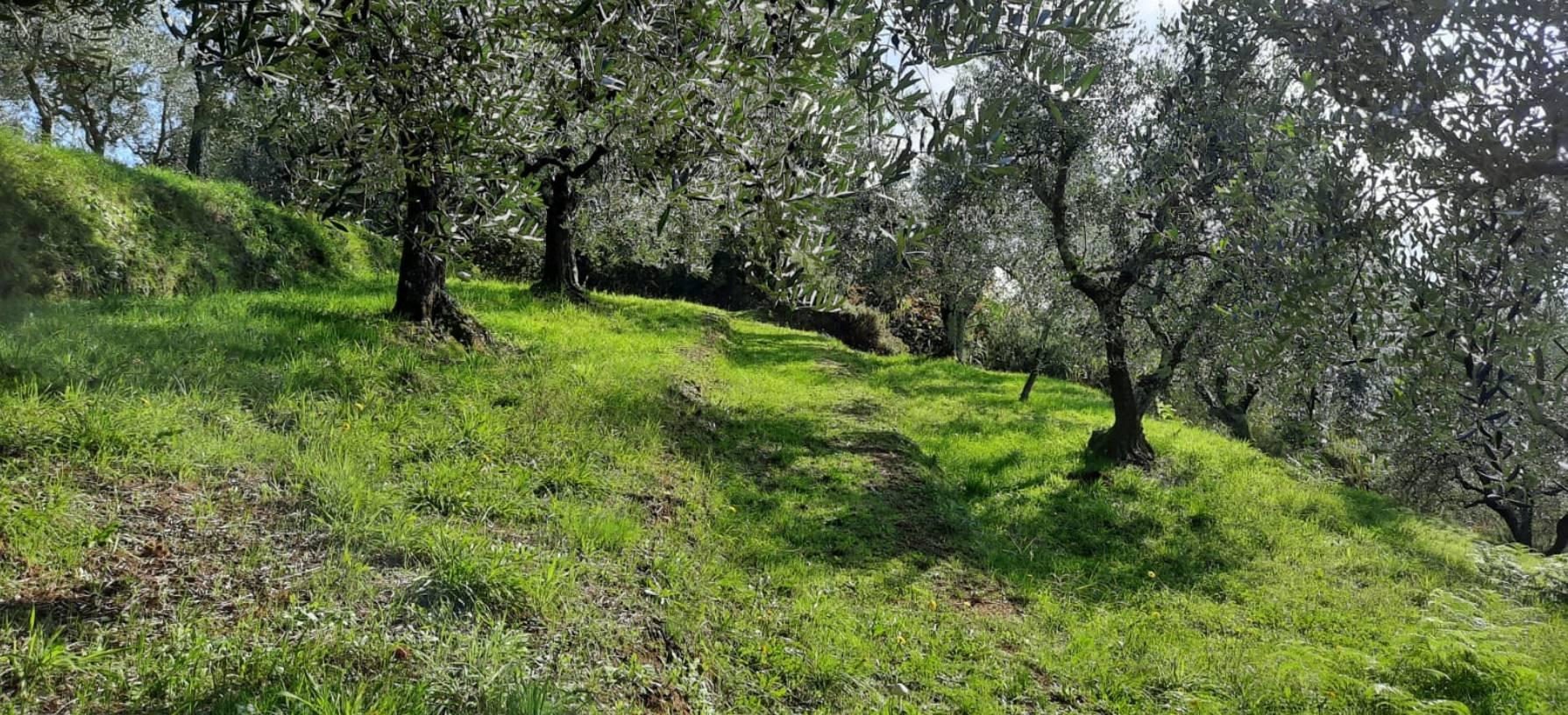 Terreno Agricolo in vendita a Serravalle Pistoiese, 9999 locali, zona Zona: Castellina, prezzo € 15.000 | CambioCasa.it