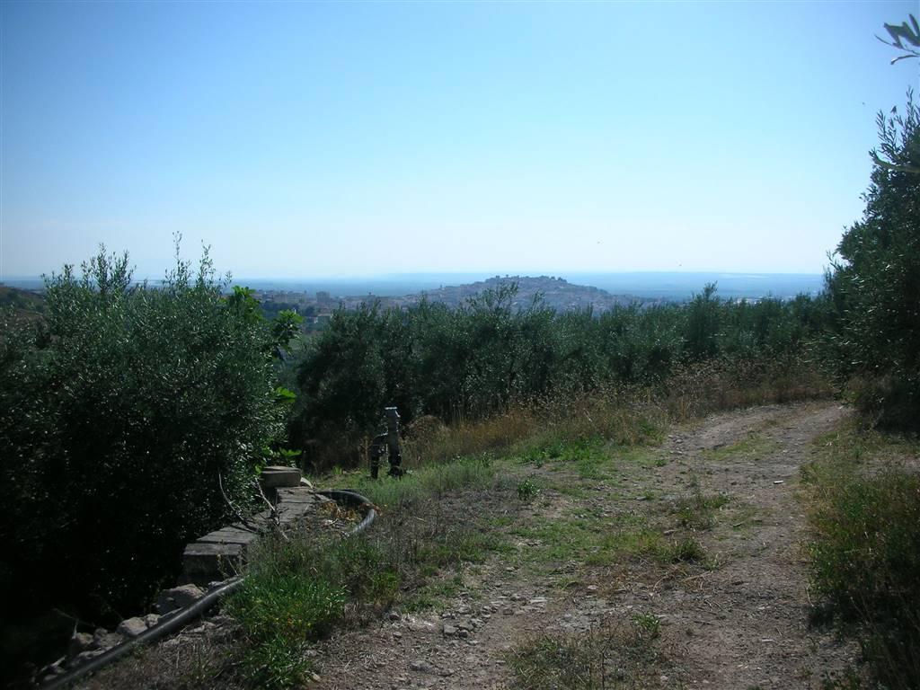 Terreno Agricolo in vendita a Canosa di Puglia, 9999 locali, prezzo € 25.000 | CambioCasa.it