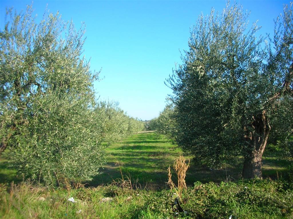 Terreno Agricolo in vendita a Canosa di Puglia, 9999 locali, prezzo € 16.000 | CambioCasa.it