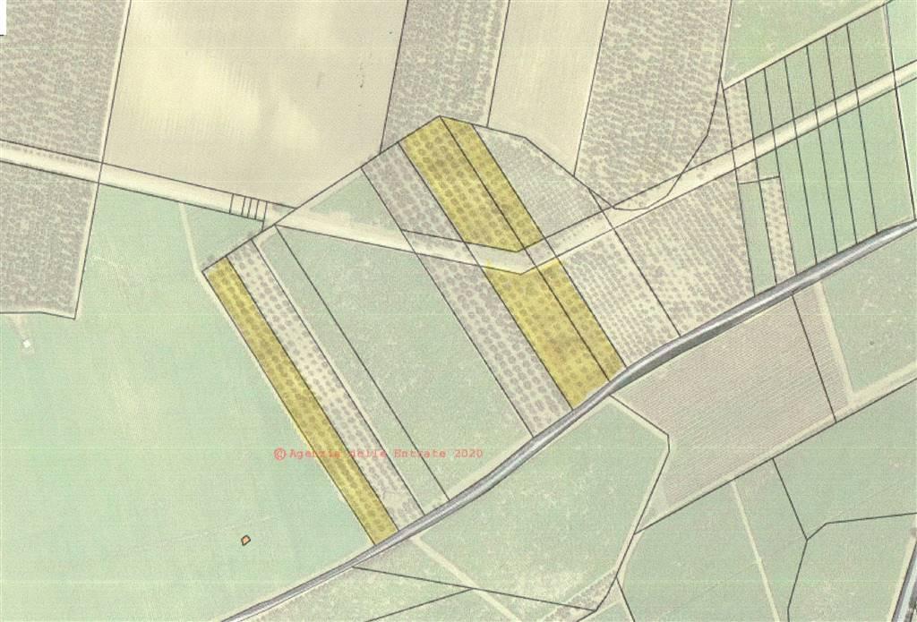 Terreno Agricolo in vendita a Minervino Murge, 9999 locali, prezzo € 65.000 | CambioCasa.it
