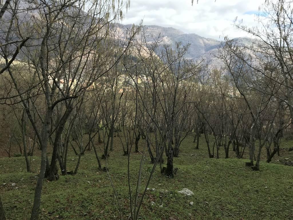 Terreno Agricolo in vendita a Giffoni Valle Piana, 9999 locali, zona Zona: Santa Caterina, prezzo € 17.000 | CambioCasa.it