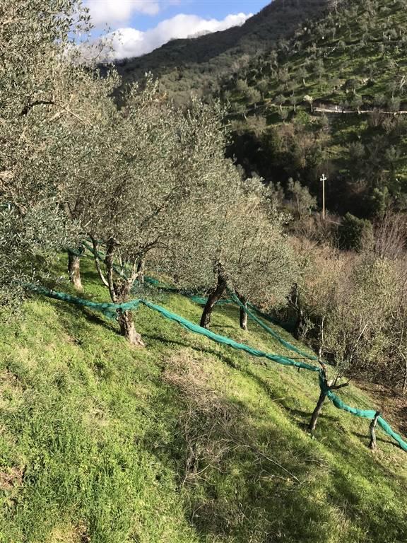 Terreno Agricolo in vendita a Giffoni Valle Piana, 9999 locali, zona Zona: Vassi, prezzo € 16.000 | CambioCasa.it