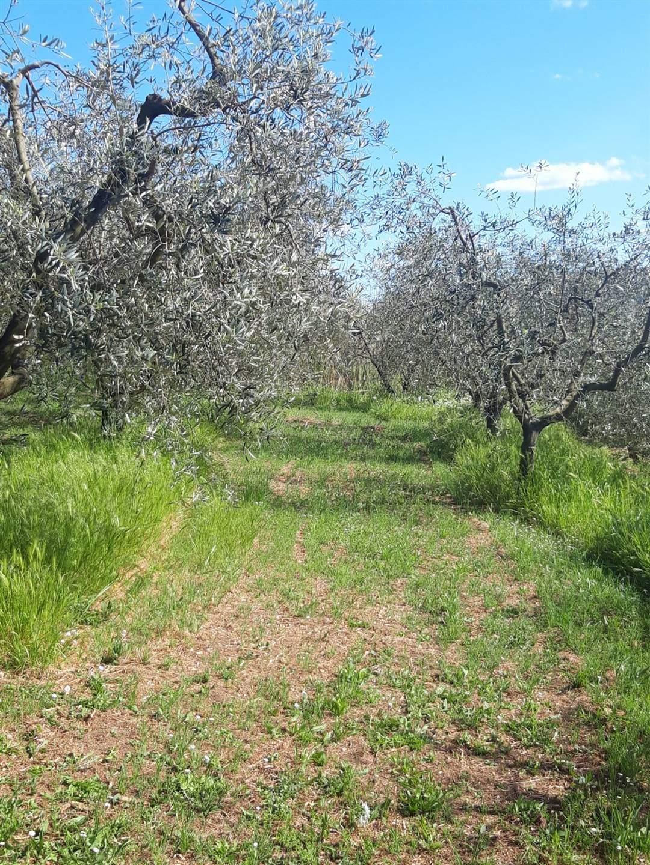 Terreno agricoloaQUARRATA
