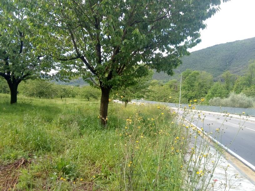 Terreno agricolo, Formicola