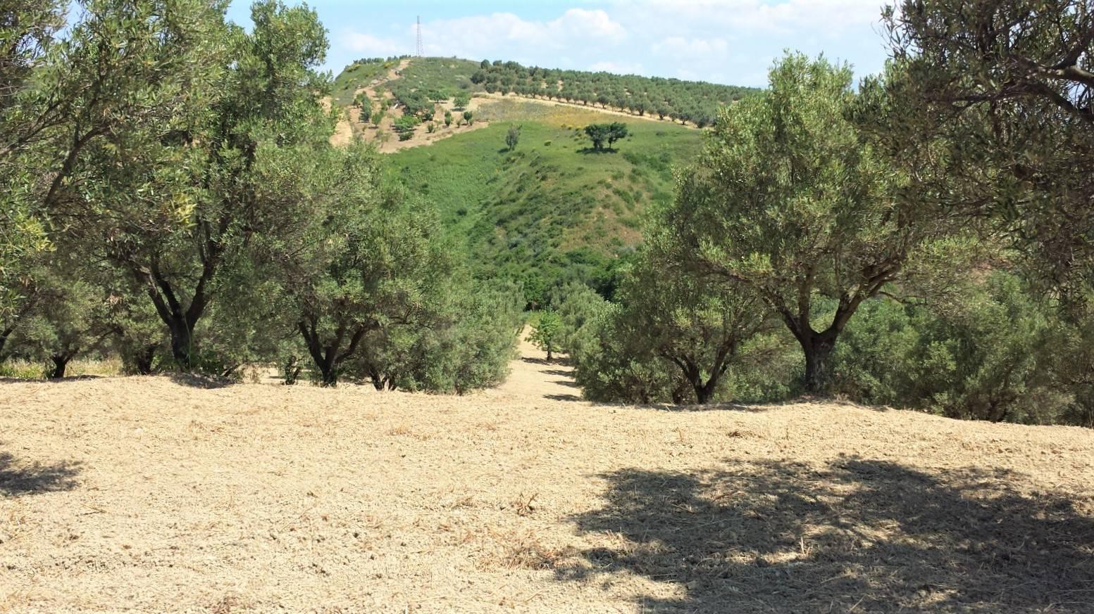 Terreno Agricolo in vendita a Borgia, 1 locali, zona Zona: Vallo, prezzo € 21.500 | CambioCasa.it