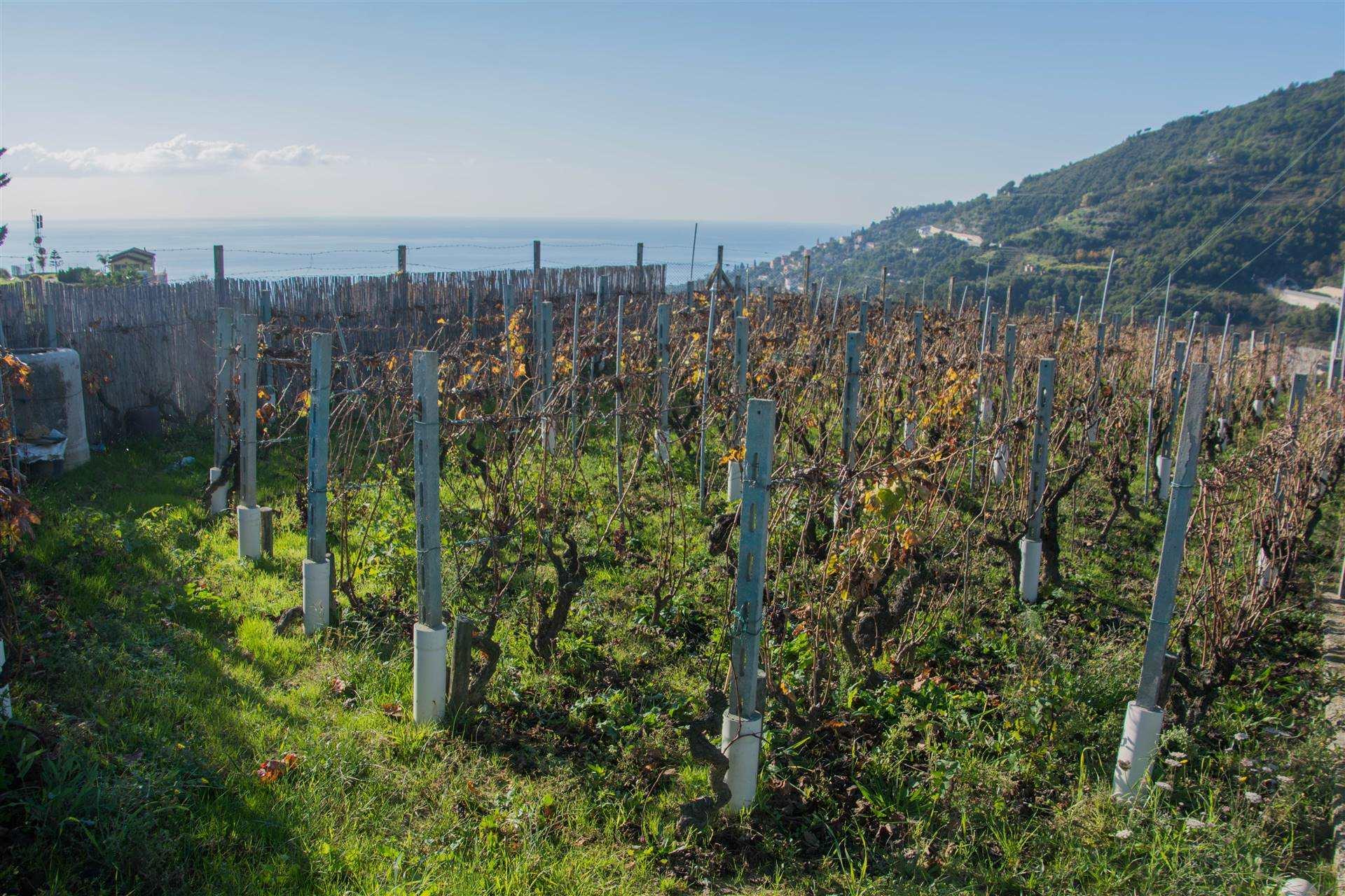 Terreno Agricolo in vendita a Ventimiglia, 9999 locali, prezzo € 18.000 | CambioCasa.it