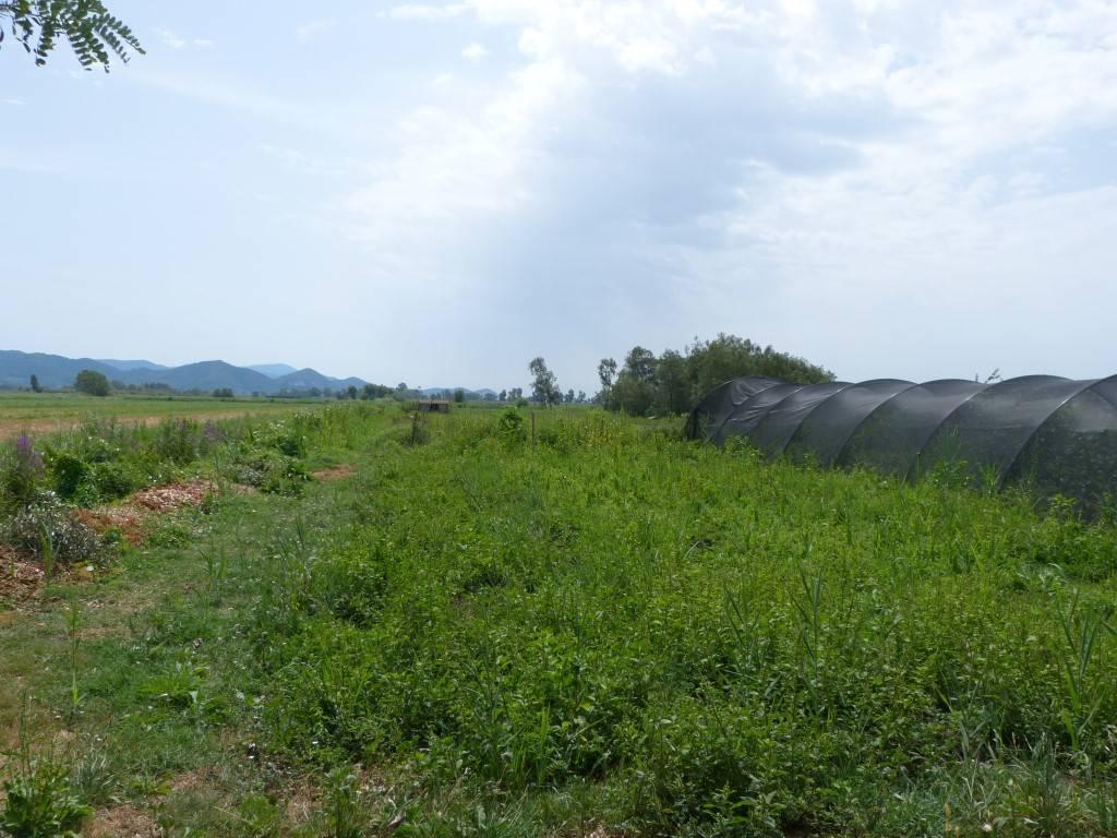 Vendita terreno agricolo piano del quercione massarosa - Agenzia immobiliare montramito ...
