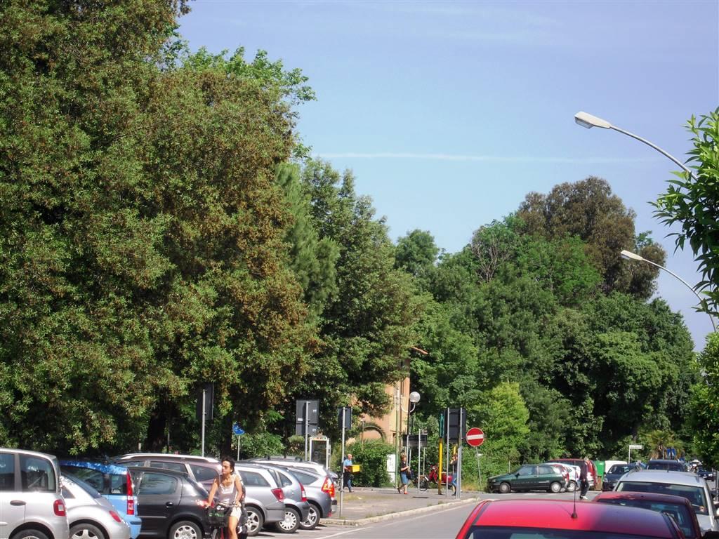 Locale commerciale, Viareggio, in ottime condizioni