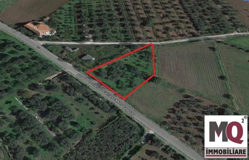 Terreno Agricolo in vendita a Falciano del Massico, 9999 locali, prezzo € 9.000   CambioCasa.it