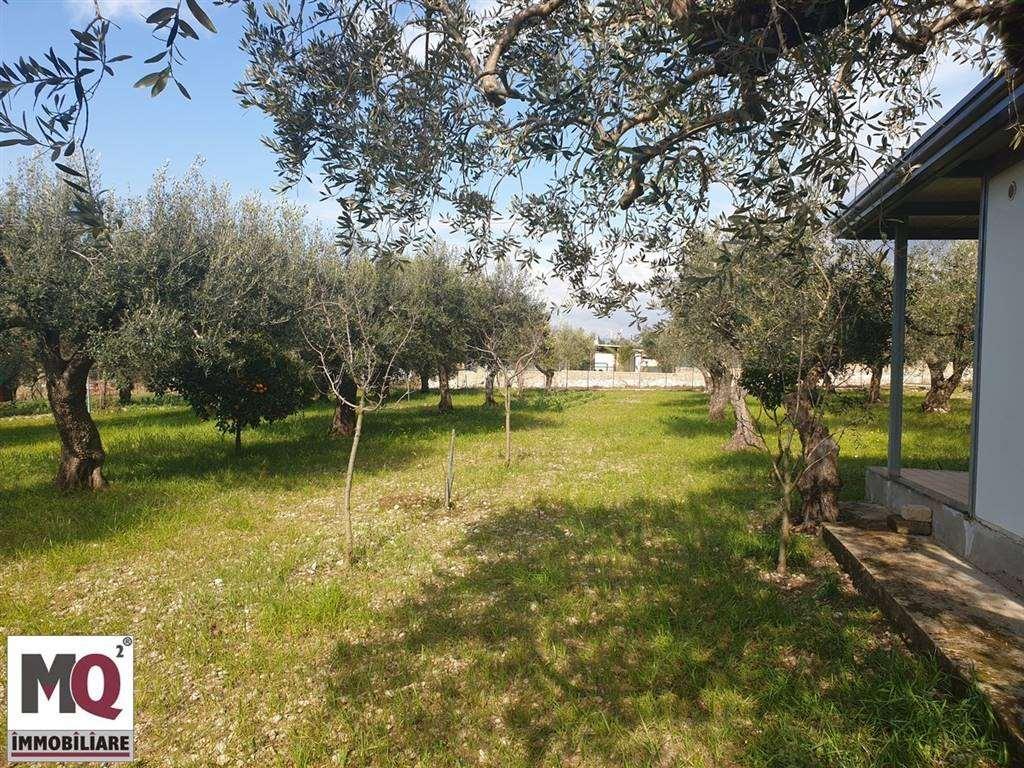 Terreno Agricolo in vendita a Sessa Aurunca, 9999 locali, zona Località: PIEDIMONTE, prezzo € 18.000 | CambioCasa.it