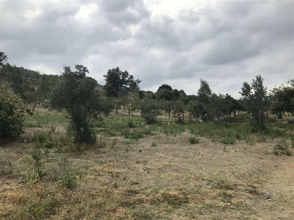 Terreno Agricolo in vendita a Settingiano, 9999 locali, prezzo € 7.000 | CambioCasa.it