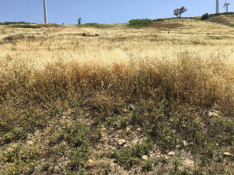 Terreno Agricolo in vendita a Agrigento, 9999 locali, zona Zona: Periferia, prezzo € 50.000 | CambioCasa.it