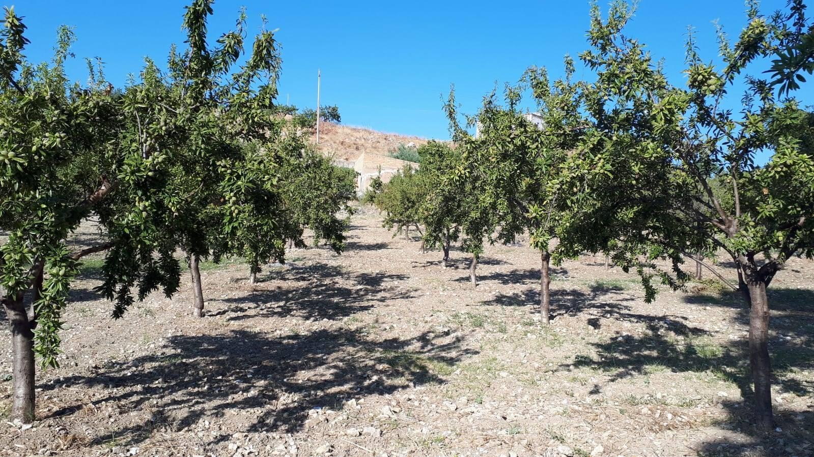 Terreno Agricolo in vendita a Campobello di Licata, 9999 locali, Trattative riservate | CambioCasa.it