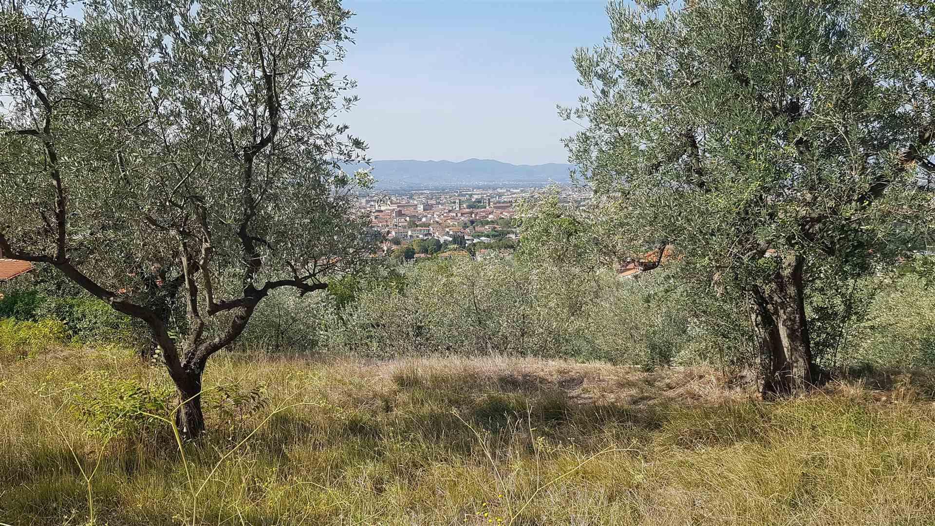 Terreno Agricolo in Vendita a Prato