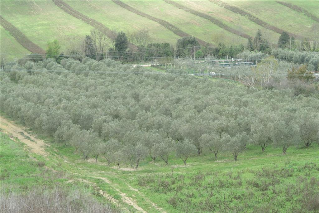 Terreno Agricolo in vendita a Roccastrada, 9999 locali, zona Zona: Ribolla, prezzo € 129.000 | CambioCasa.it