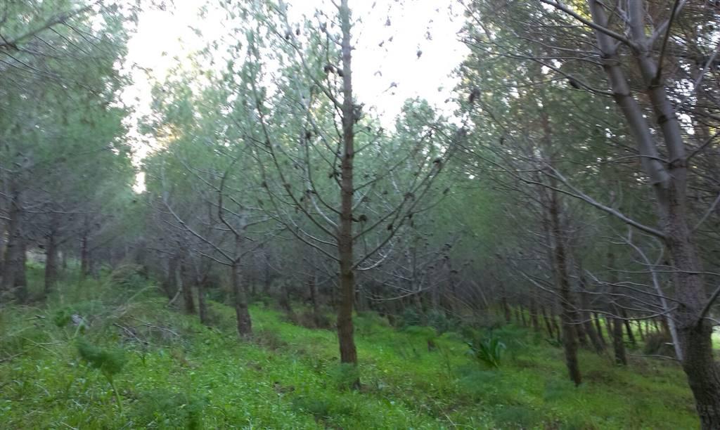 Vendita terreno agricolo sciacca piano terra rif ri v650 - Immobiliare sciacca ...