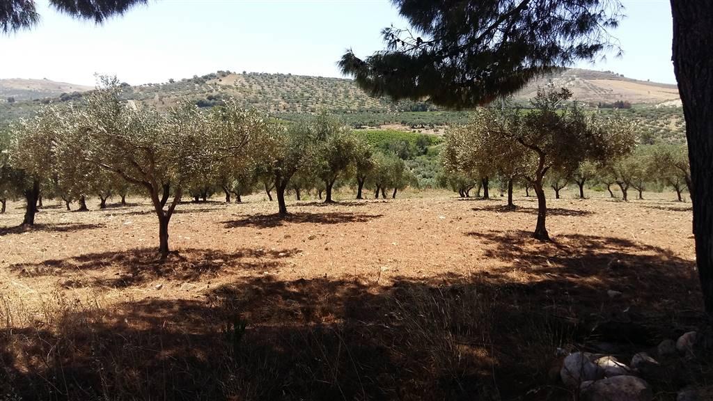 Terreno Agricolo in vendita a Sciacca, 9999 locali, prezzo € 160.000 | CambioCasa.it